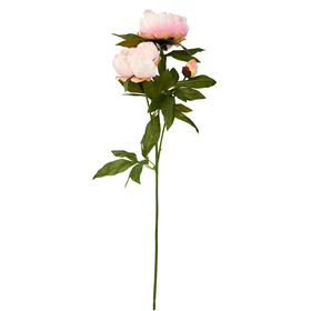 FLORISTA Pfingstrose,rosa, 70cm