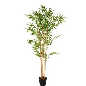 FLORISTA Bambus im Topf 150cm