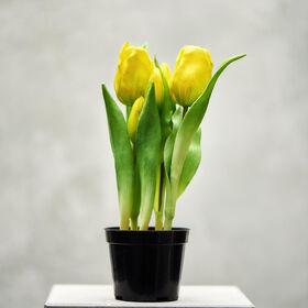 FLORISTA Tulpen Topf, gelb, 24cm
