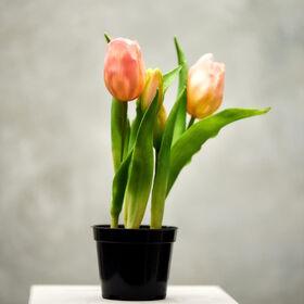 FLORISTA Tulpen Topf, rosa, 24cm